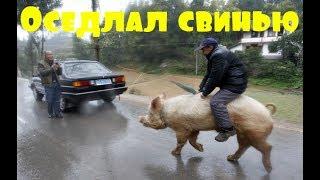 Приколы \ Неудачи \ Падения \ Идиоты \ Оседлал свинью \ Подборка от Best Video #1