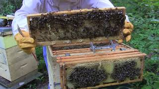 Hive Inspection, Checking The Honey Supers
