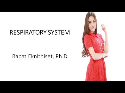 ระบบหายใจ RESPIRATORY SYSTEM