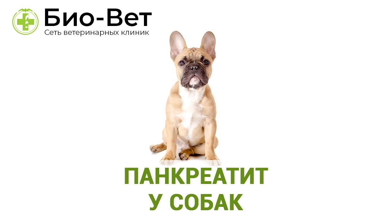 как проявляется панкреатит у собаки