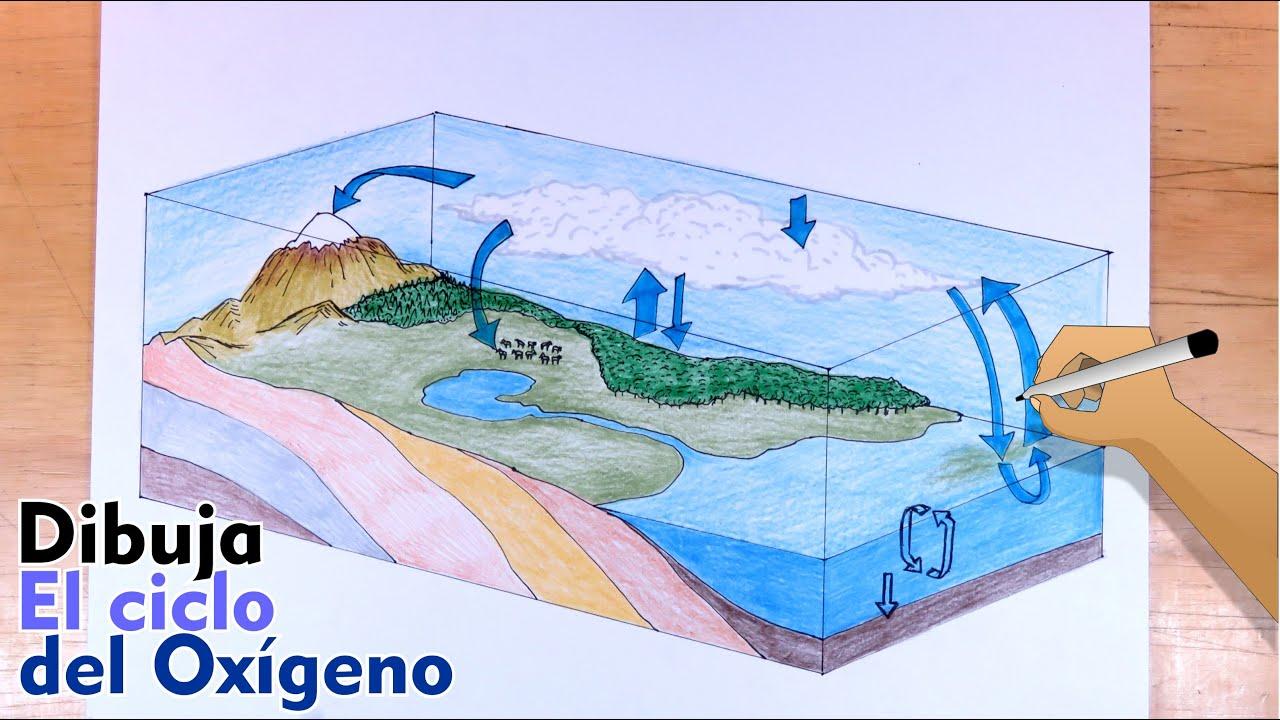 Cómo dibujar el Ciclo del Oxígeno paso a paso
