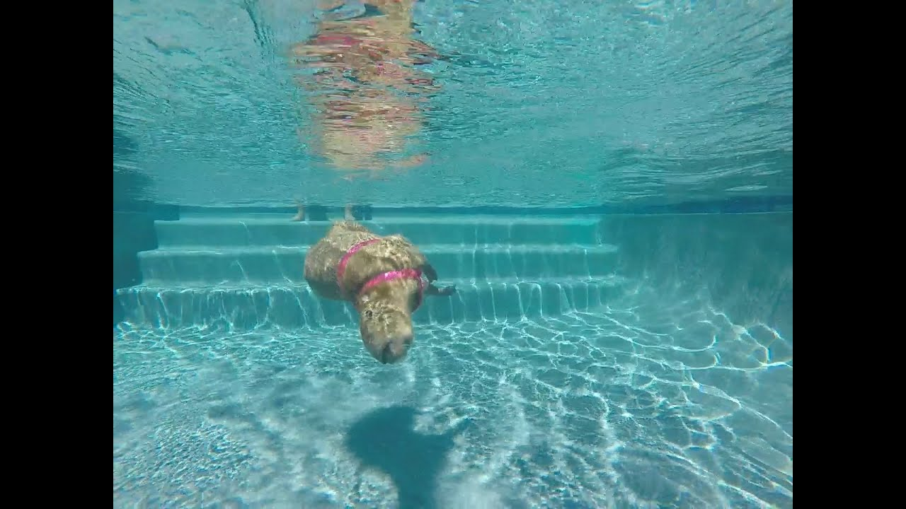 capybara wallpaper pool -#main