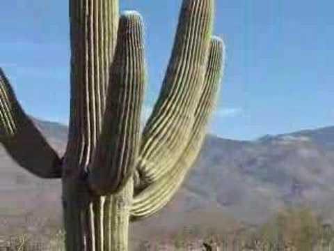 Fotos flora fauna desierto sonora 28
