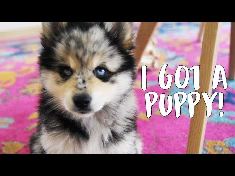 download MY NEW PUPPY! Vlog