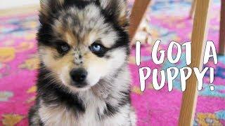 MY NEW PUPPY! Vlog