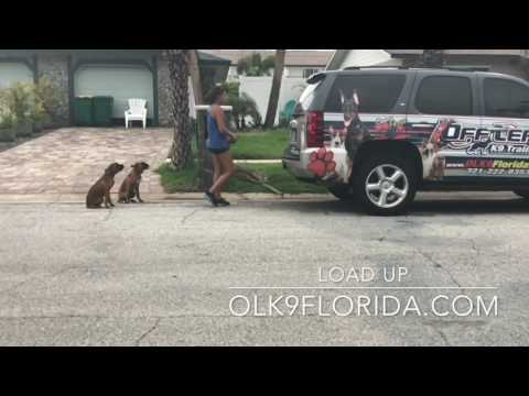 "5 mo old Boxer ""Oliver"" 