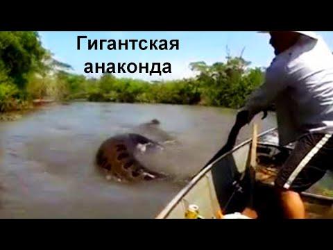 9 невероятных случаев снятых на рыбалке!