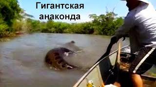 видео: 9 невероятных случаев снятых на рыбалке!