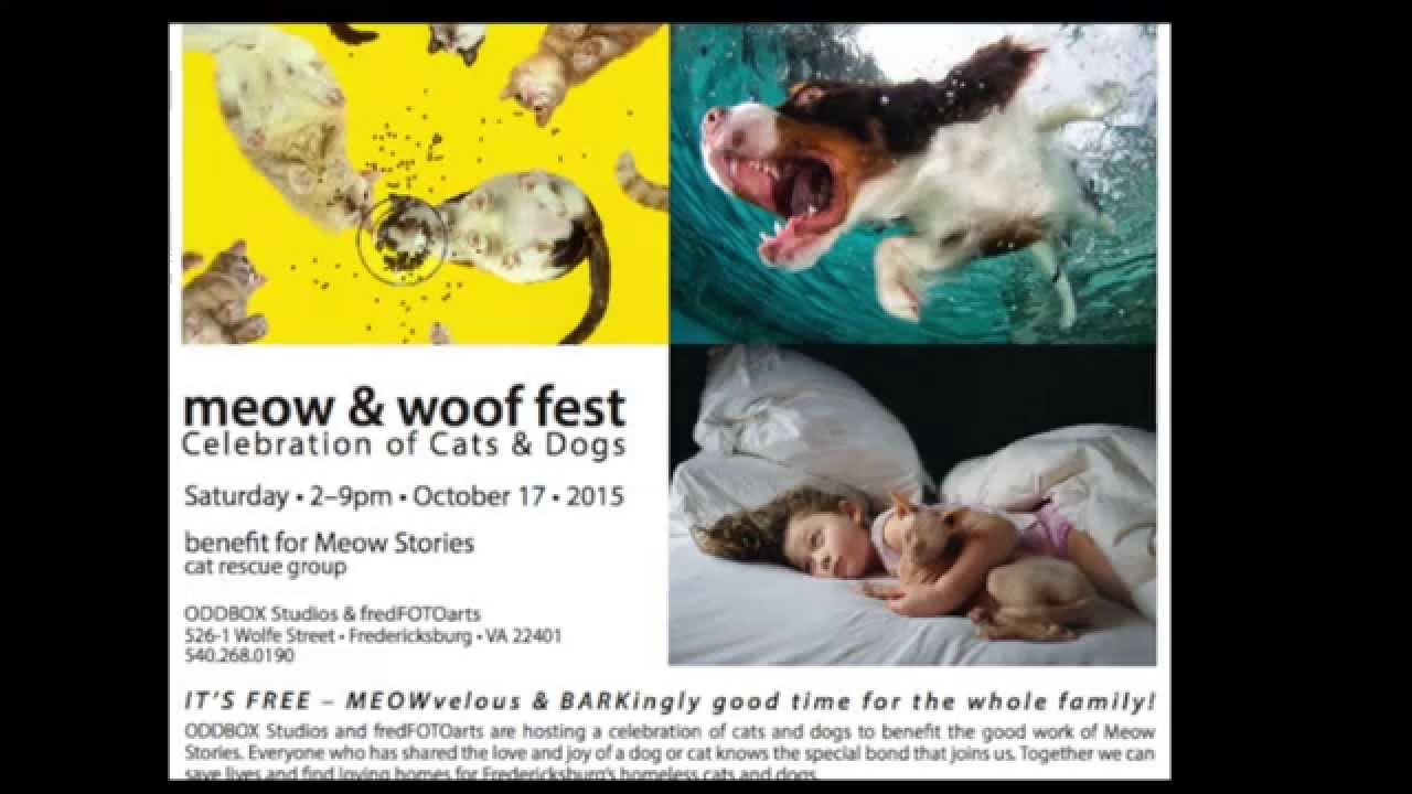 Meow WOOF Fest with Fred FOTO Arts & ODDBOX Studios on October 17, 2015 2-9  p m
