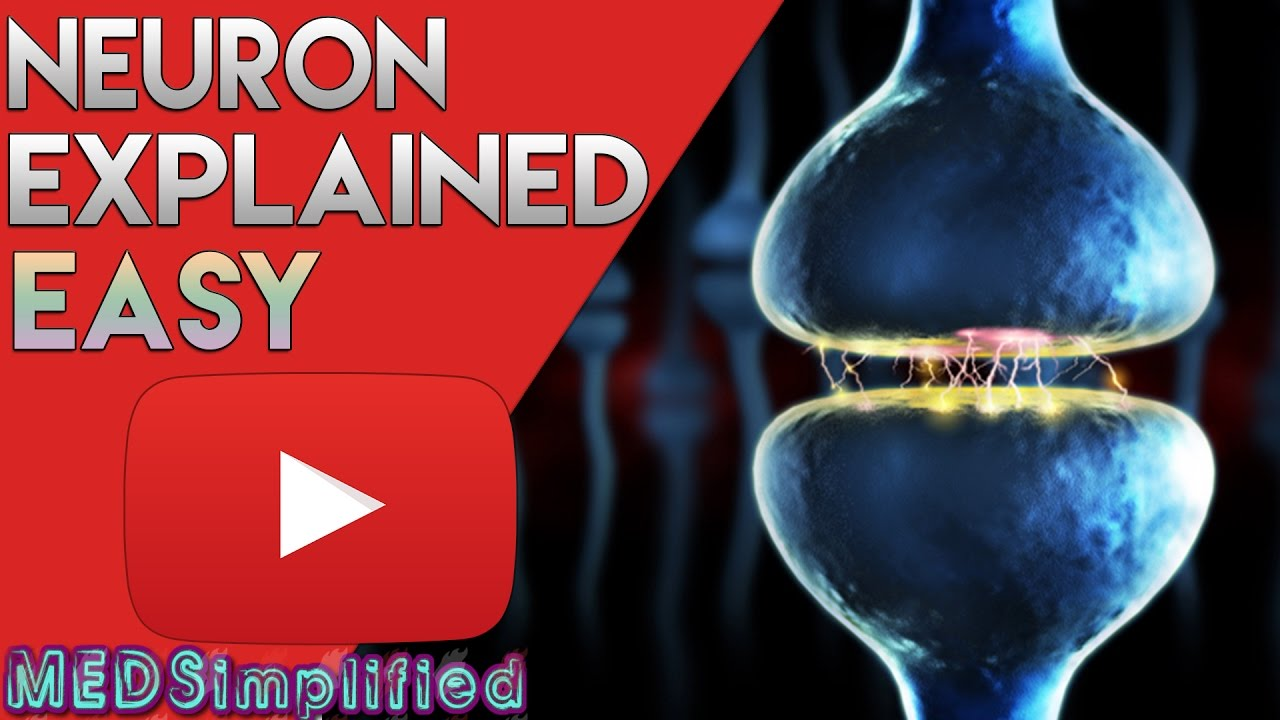 Neuron Anatomy And Function Simplified Video Youtube