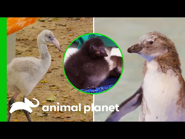 Cute Baby Birds | The Zoo