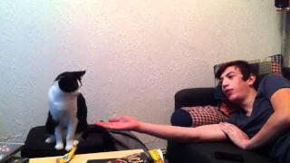 Cat High Five!