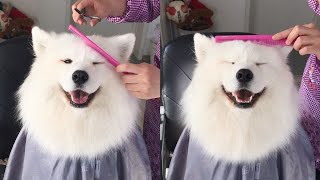 my-dog-loves-getting-her-hair-cut