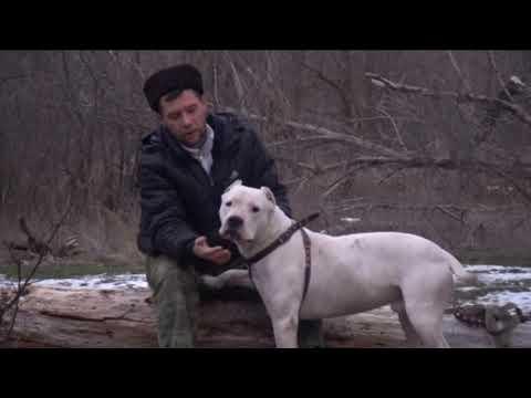 Денис Журавлев и его Dogo arentino Аргентинский дог или просто Бурый