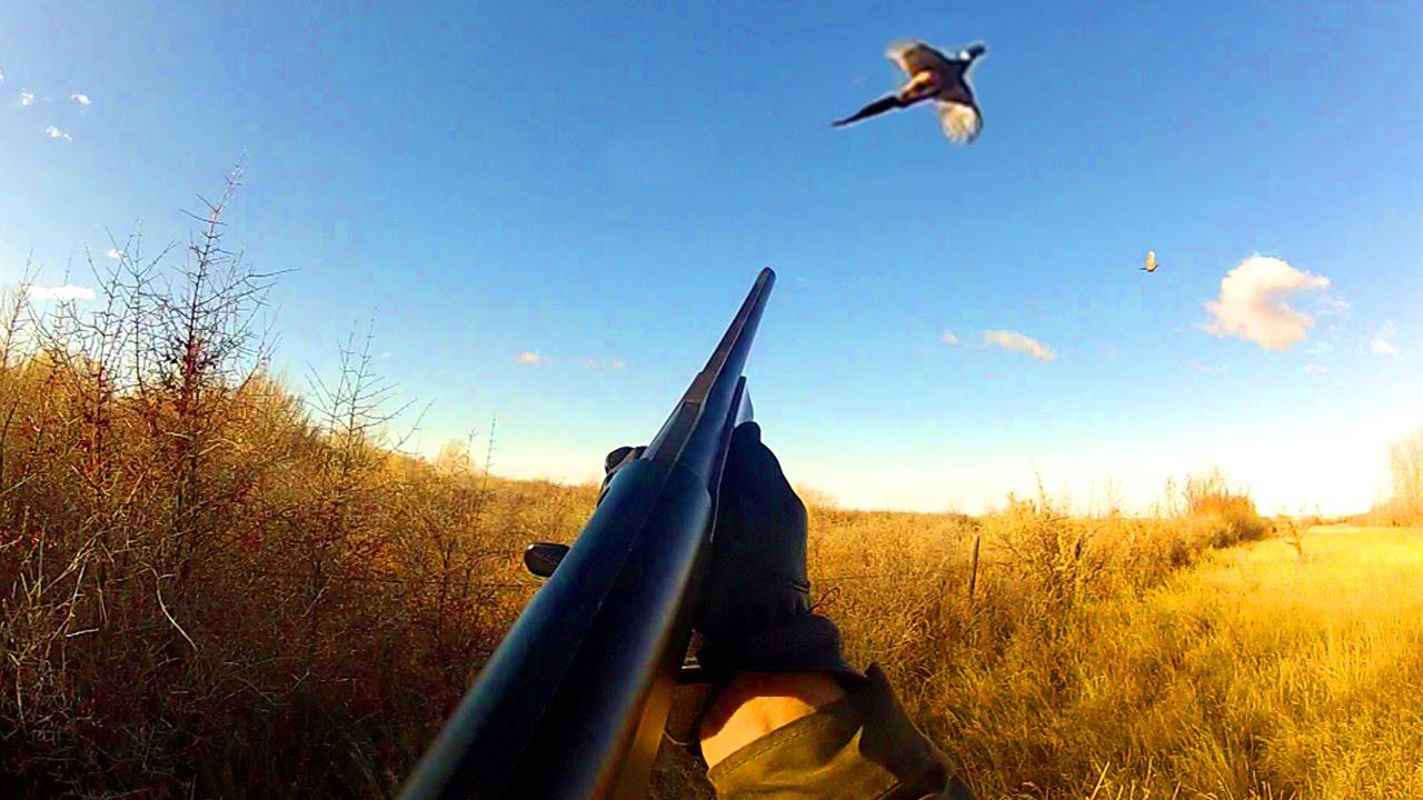 Fall Bird Wallpaper Pheasant Hunting Montana Youtube