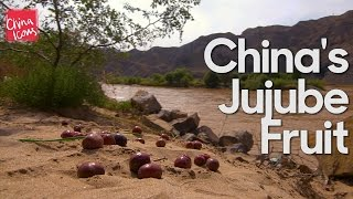 Jujubes of the Yellow River | A China Icons Video