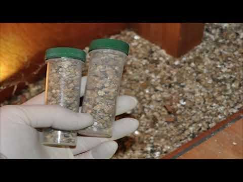 vermiculite-great-insulation:-asbestos-safety,-what-does-vermiculite-look-like