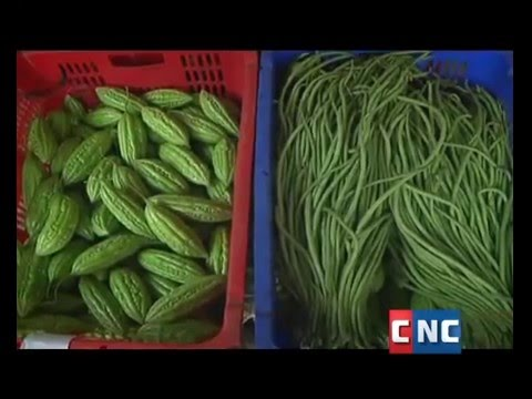 SAC's Vegetable in Svay Rieng - Part 1/2