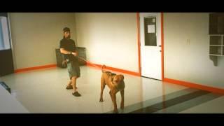 Dog Training With Ken Dupcak Cpdt-ka