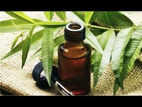 ★ Масло чайного дерева избавит от грибка лишая, волдырей и ожогов