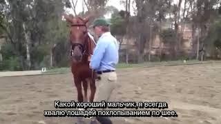 Работа лошади в руках.  Перевод Art2Ride Russia