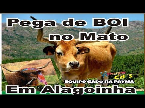 🐴Pega de boi de Alagoinha/PE