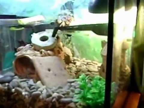 Обустраиваем аквариум для красноухой черепахи своими руками 5