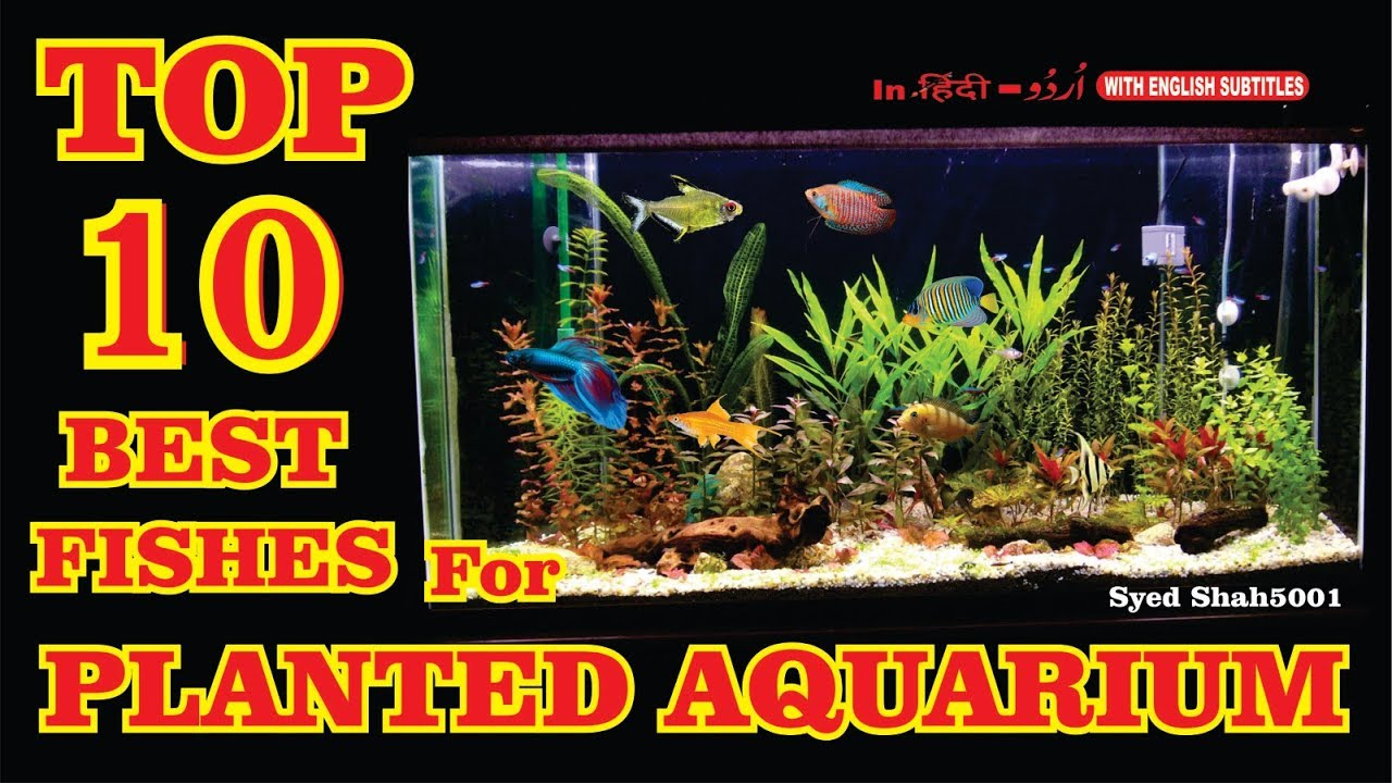 top 10 best fish for the planted aquarium best fish for planted tank