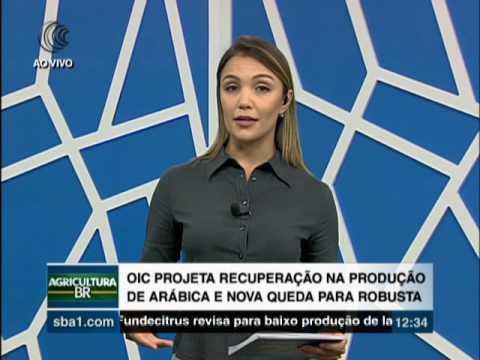 PRODUÇÃO ARÁBICA OIC - 19/12/2016