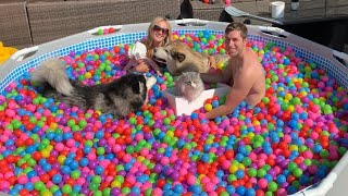 Dogs And Baby Have A Giant Pool Party! Phil Thinks Its A Bath!! [CUTEST VIDEO!!]