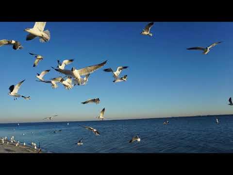 Feeding seagulls near Clearwater Beach Florida