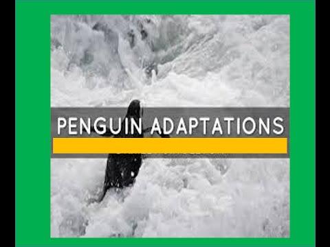 Penguins Adaptations For Kids