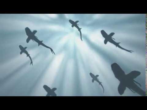 Shark Story | FULL LENGTH | MagellanTV