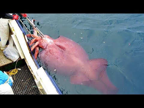 Modern Fast Squid Fishing Technology On Big Boat, Amazing Traditional Big Squid Fishing Skill