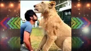 Улетное видео с львами и тиграми 2019 года