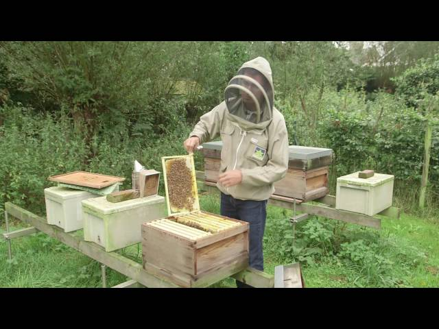Bijenhouden: natuurbouw als antwoord op vervuilde bijenwas en vervalste kunstraat.