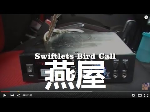 The Best Swiftlets Bird Sound To Conduct Swiftlets House Feasibility Study 燕屋