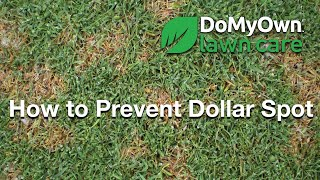 How to Prevent Dollar Spot Fungus