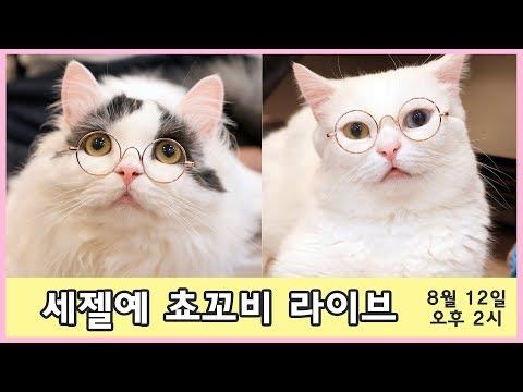 건강튼튼 고양이 쵸꼬비 라이브 (진단 후 30주차)