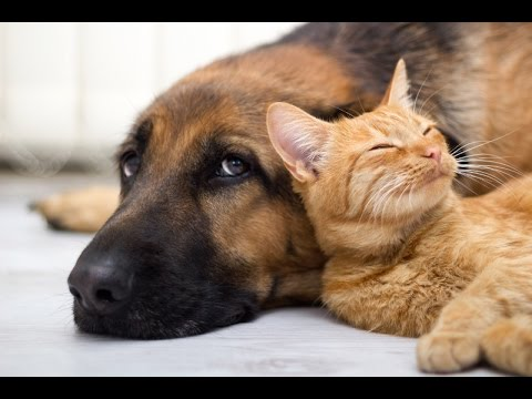 Wonderful Cats And Dogs Loving Each Other Youtube
