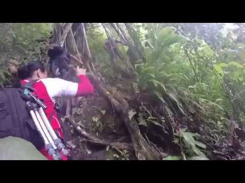 HAWAII HIKING || UPPER MANOA FALLS