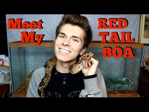 Meet My Red Tail Boa!