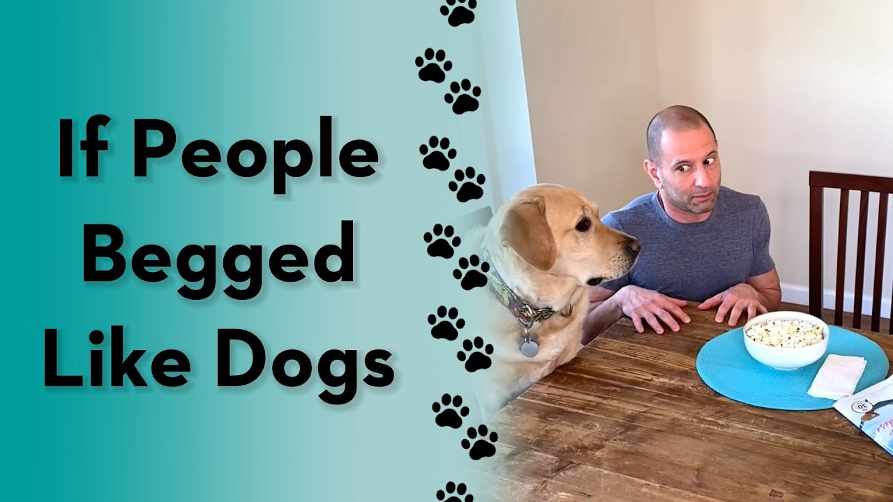 How does your dog beg?