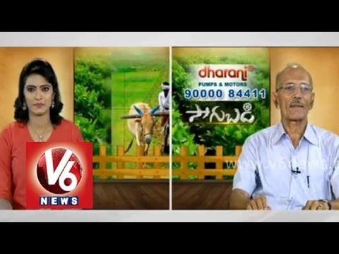 Cultivation techniques of  leafy vegetables - Horticulture Professor Rama Subba Reddy - Sagubadi