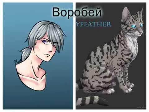 Коты - Воители - в облике людей!
