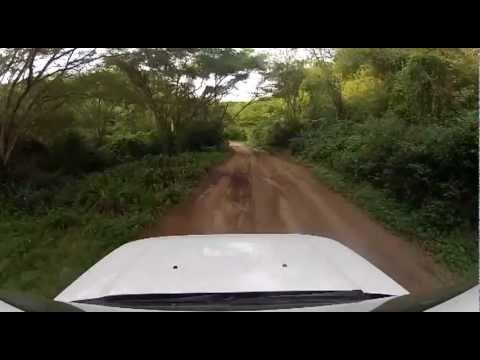 Mapelane