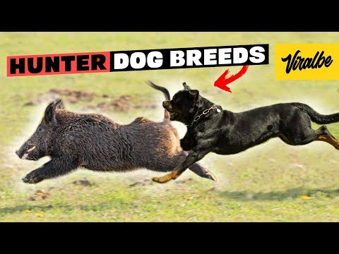 These Are 10 Hunting Dog Breeds