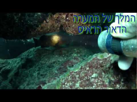 Amazing Underwater Life filmed Freediving in Israel marine nature riserve avidag 4
