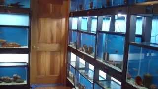 Building a fish room showroom part #6