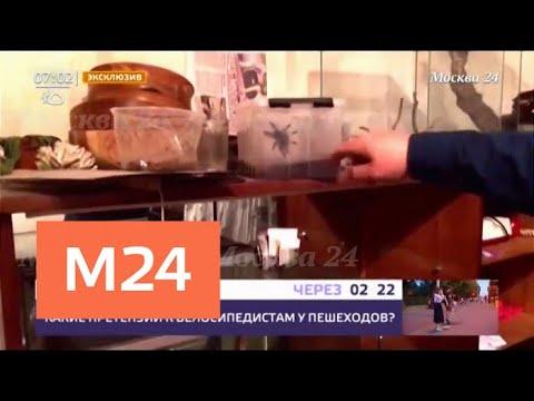 На Ленинском проспекте из квартиры сбежали змеи - Москва 24